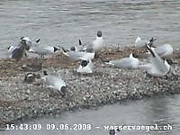 Water Birds Zurich Switzerland Zurich Switzerland - Webcams Abroad live images