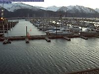 Seward Harbour Alaska Seward United States of America - Webcams Abroad live images