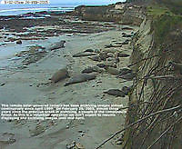 Elephant Seal Monterey Bay CA Monterey United States of America - Webcams Abroad live images