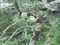 Pinguincams im Allwetterzoo Muenster Germany cam 1 Muenster Germany - Webcams Abroad live images